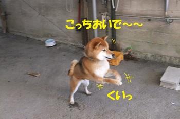 DSCF6633-1.jpg