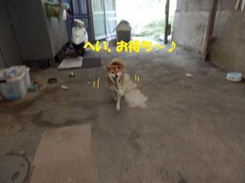 PA011337-1.jpg