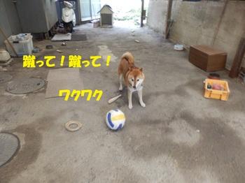 PA011346-1.jpg
