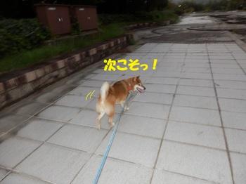 PA011368-1.jpg