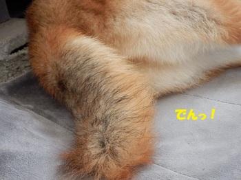 PA091560-1.jpg