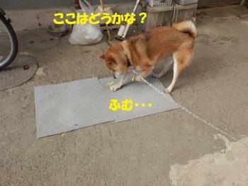 PA255134-.jpg